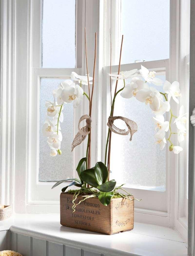 Белые орхидеи на окне