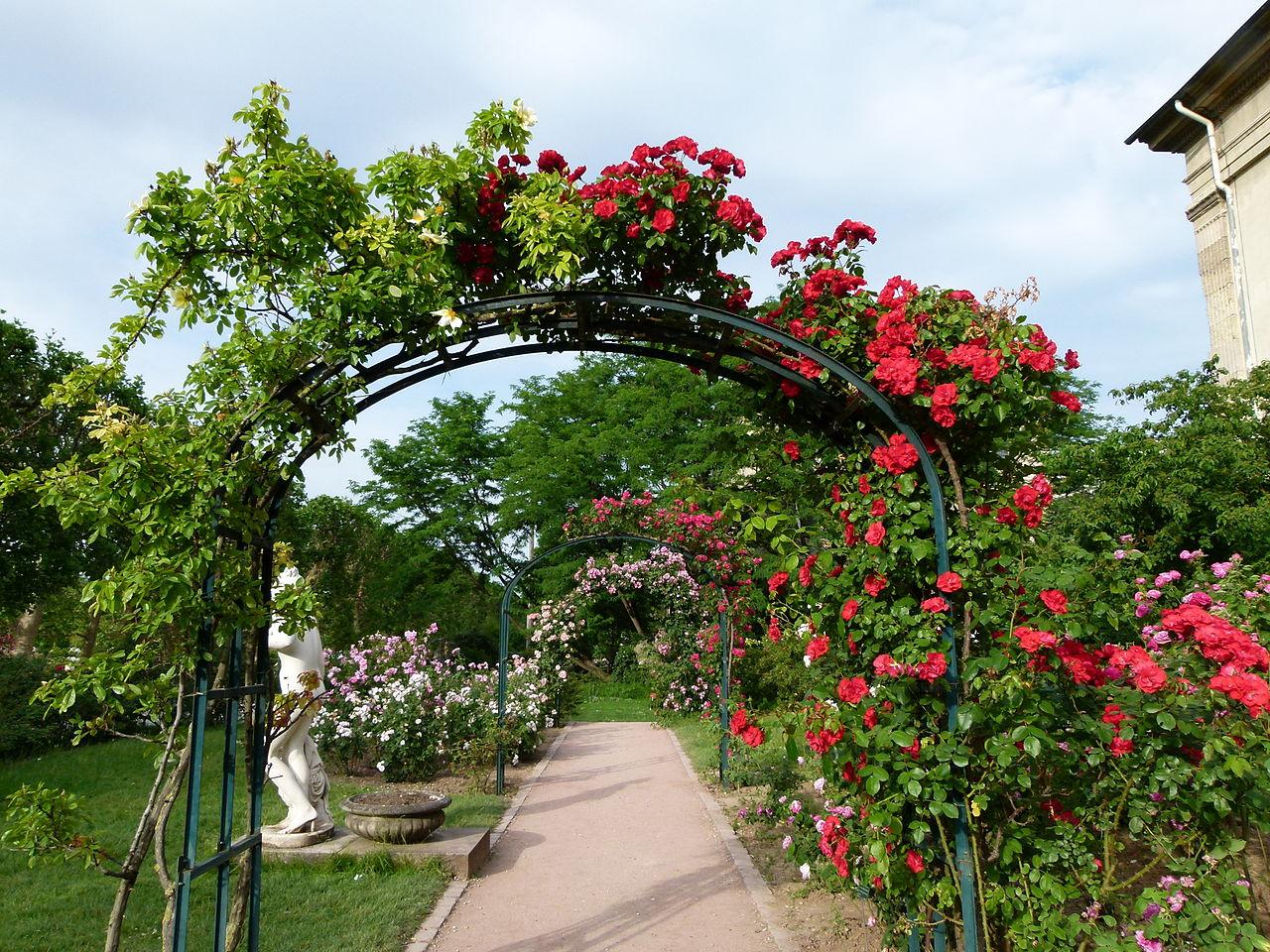 Арка из роз в ландшафтном дизайне