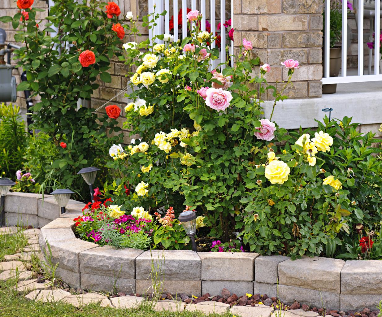 Цветник из роз в ландшафтном дизайне