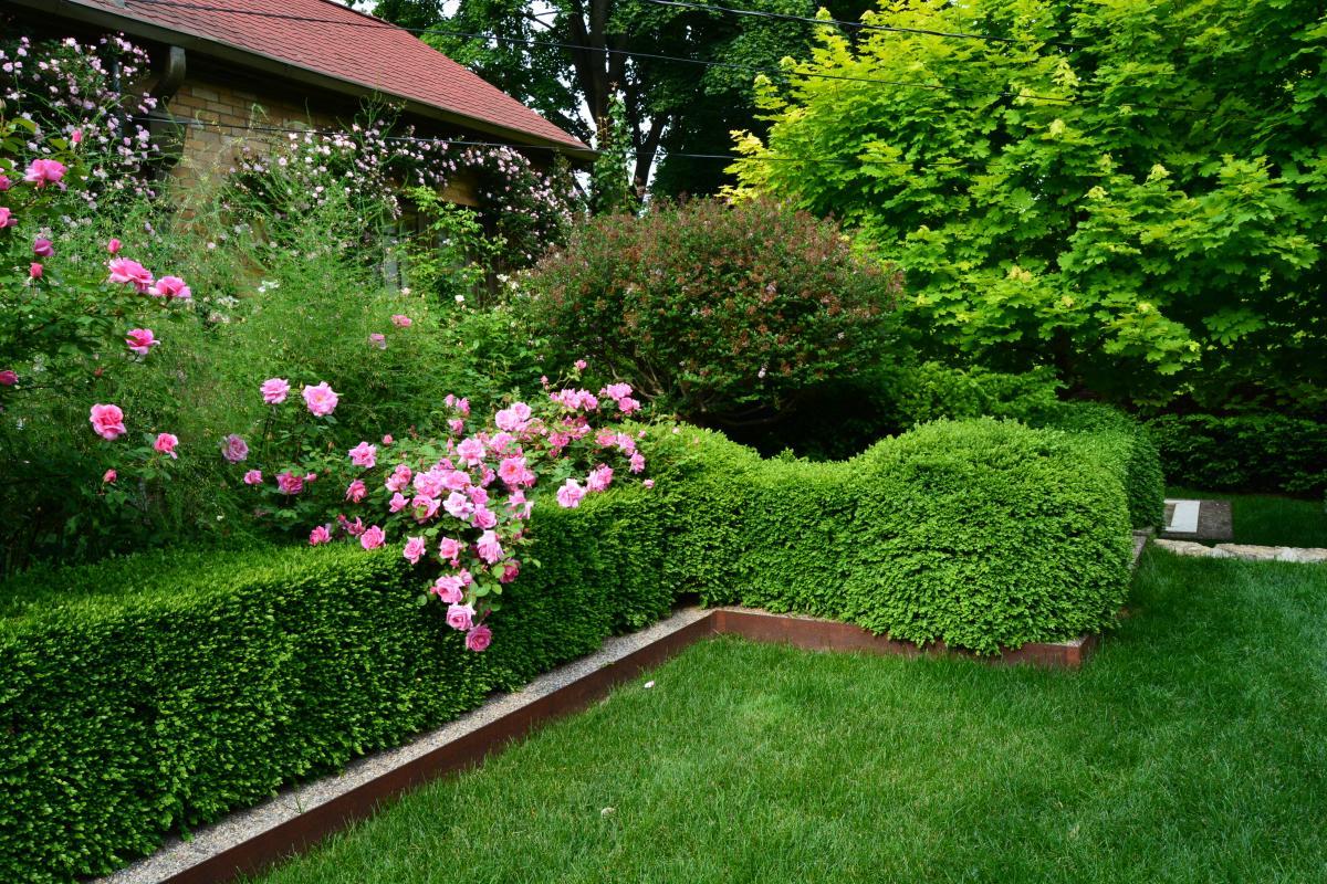 Розы во внутреннем дворике