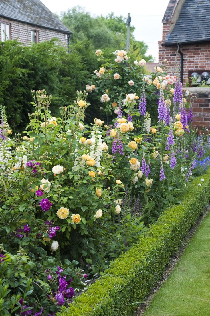 Фиолетовые розы в дизайне сада