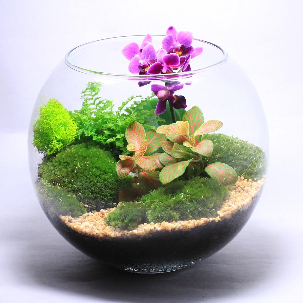 Флорариум с орхидеей, мхом и другими растениями