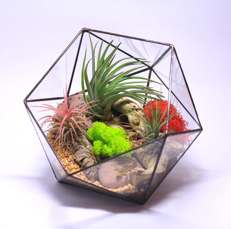 Красивый яркий флорариум