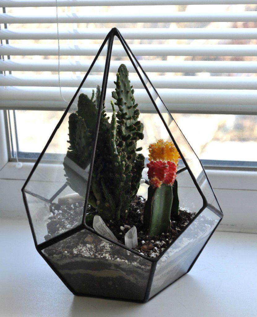Высокий флорариум с кактусами