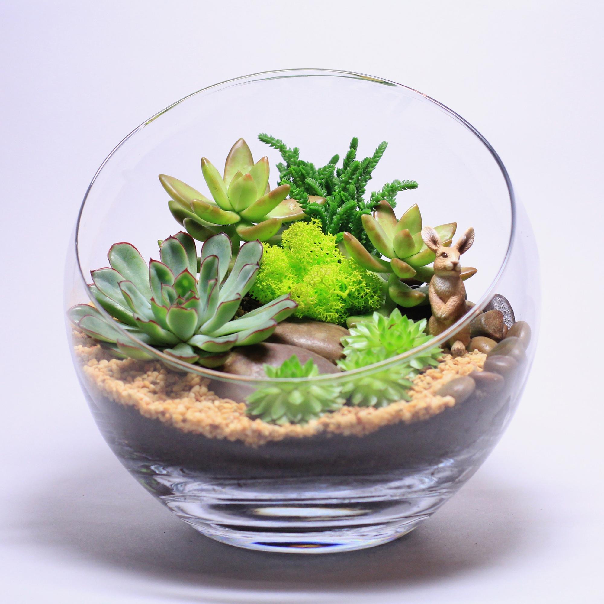 Небольшой флорариум