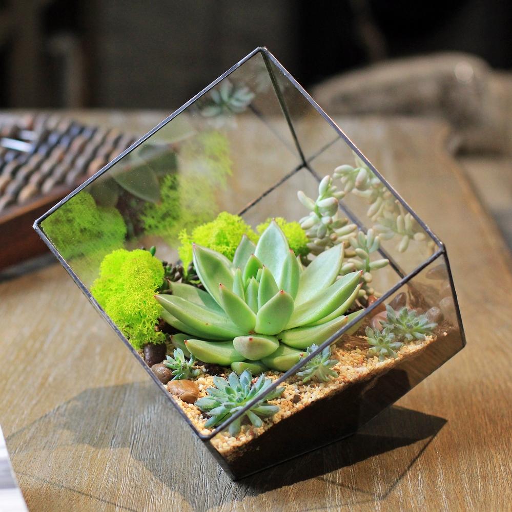 Флорариум в форме куба