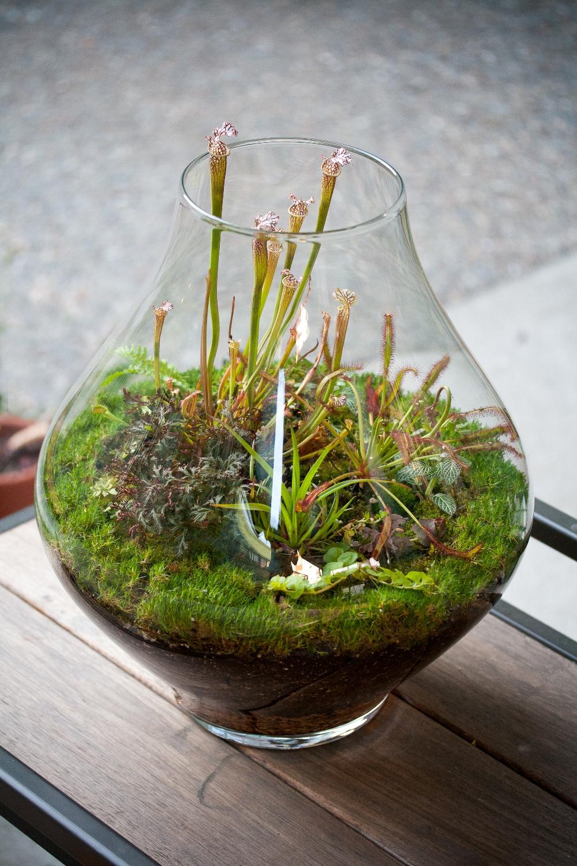 Флорариум с хищным растением
