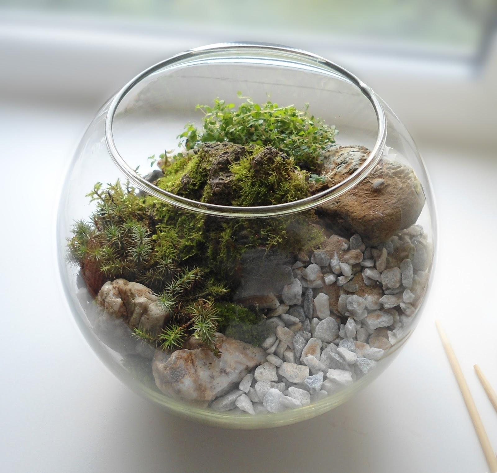 Флорариум с камнями, мхом и другими растениями