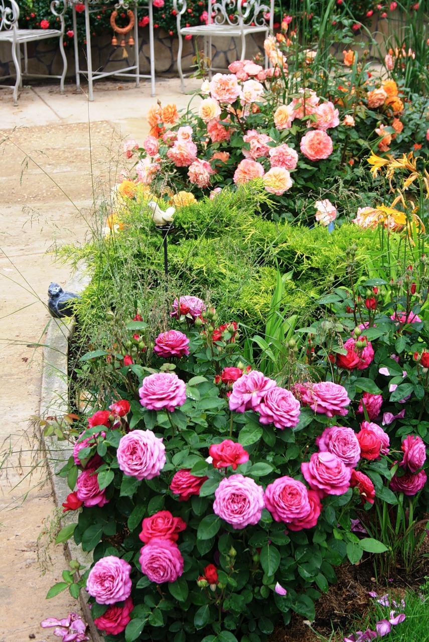 Клумба из роз в саду