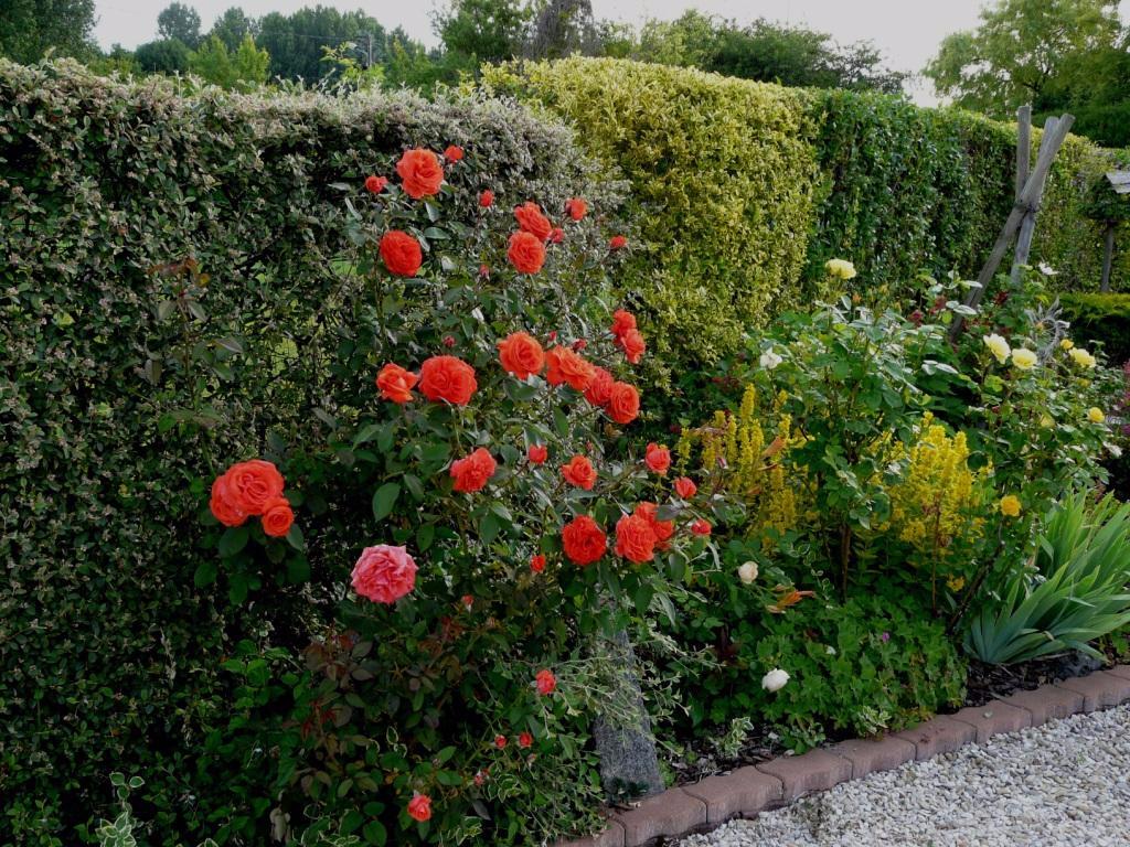 Красные розы в ландшафтном дизайне