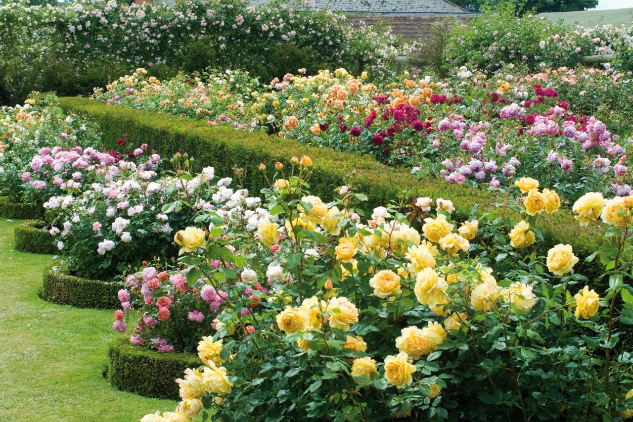 Круглая клумба из роз