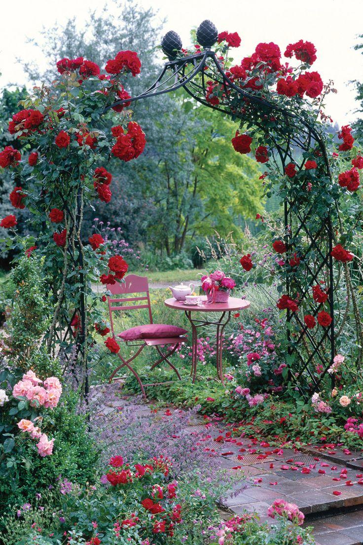 Розы в осеннем саду