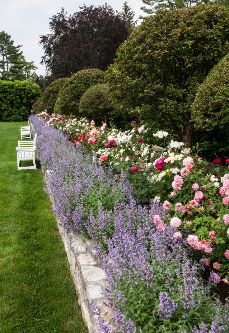 Роза в саду в стиле прованс