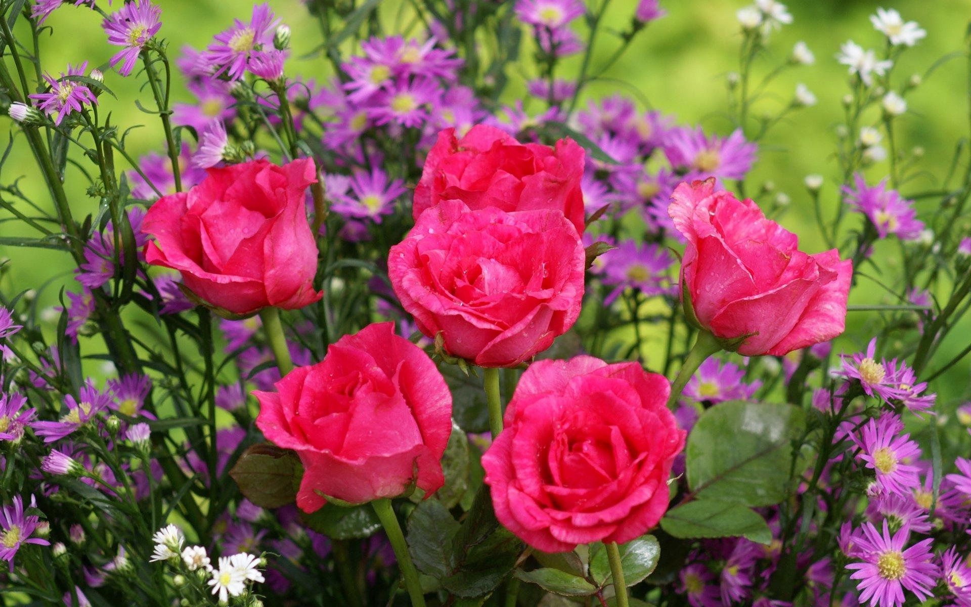 Розовая роза в дизайне сада