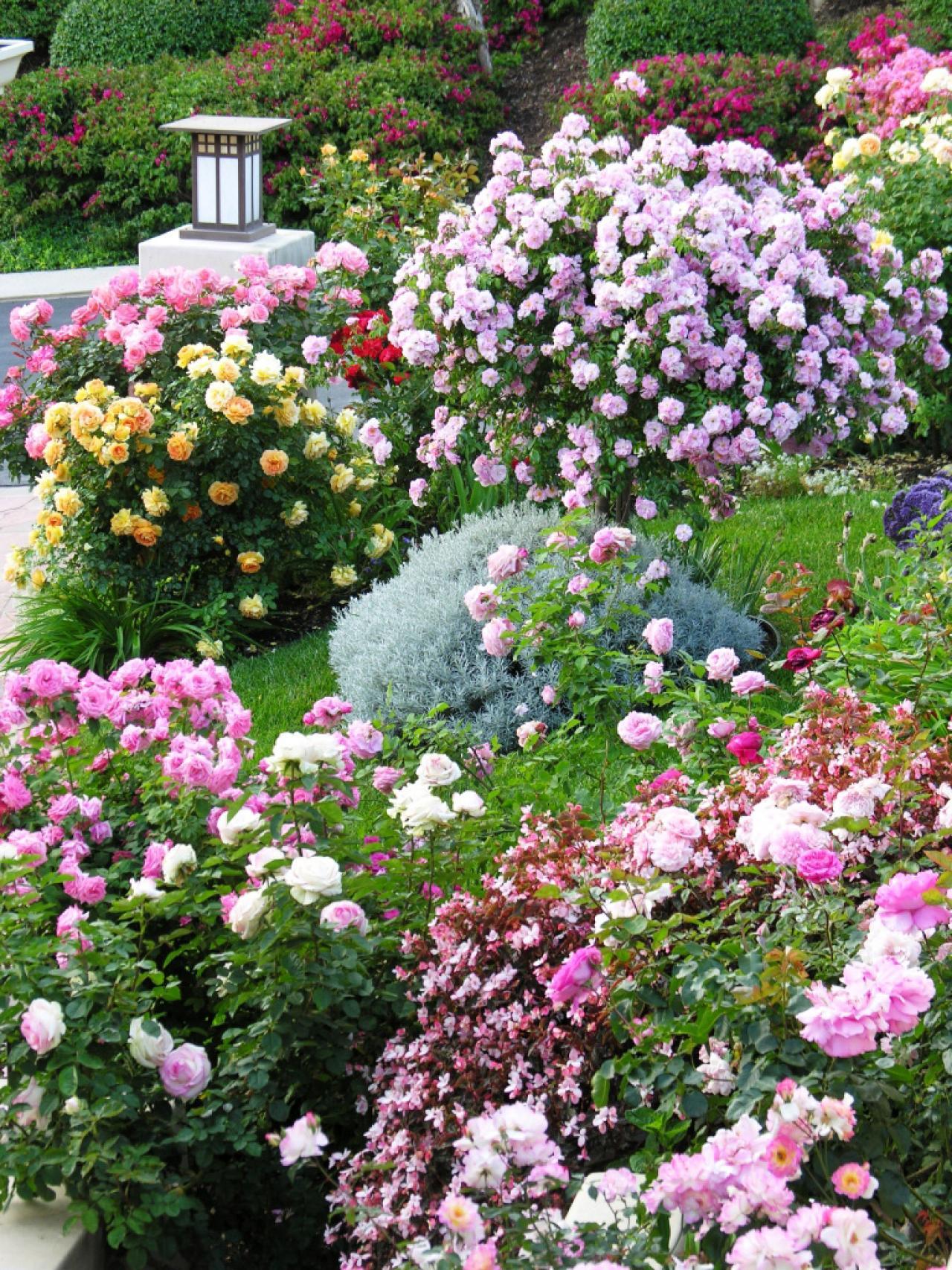 Альпийская горка с розами и другими растениями в ландшафтном дизайне
