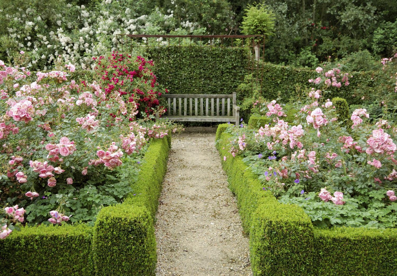 Розарии с живым бордюром в саду