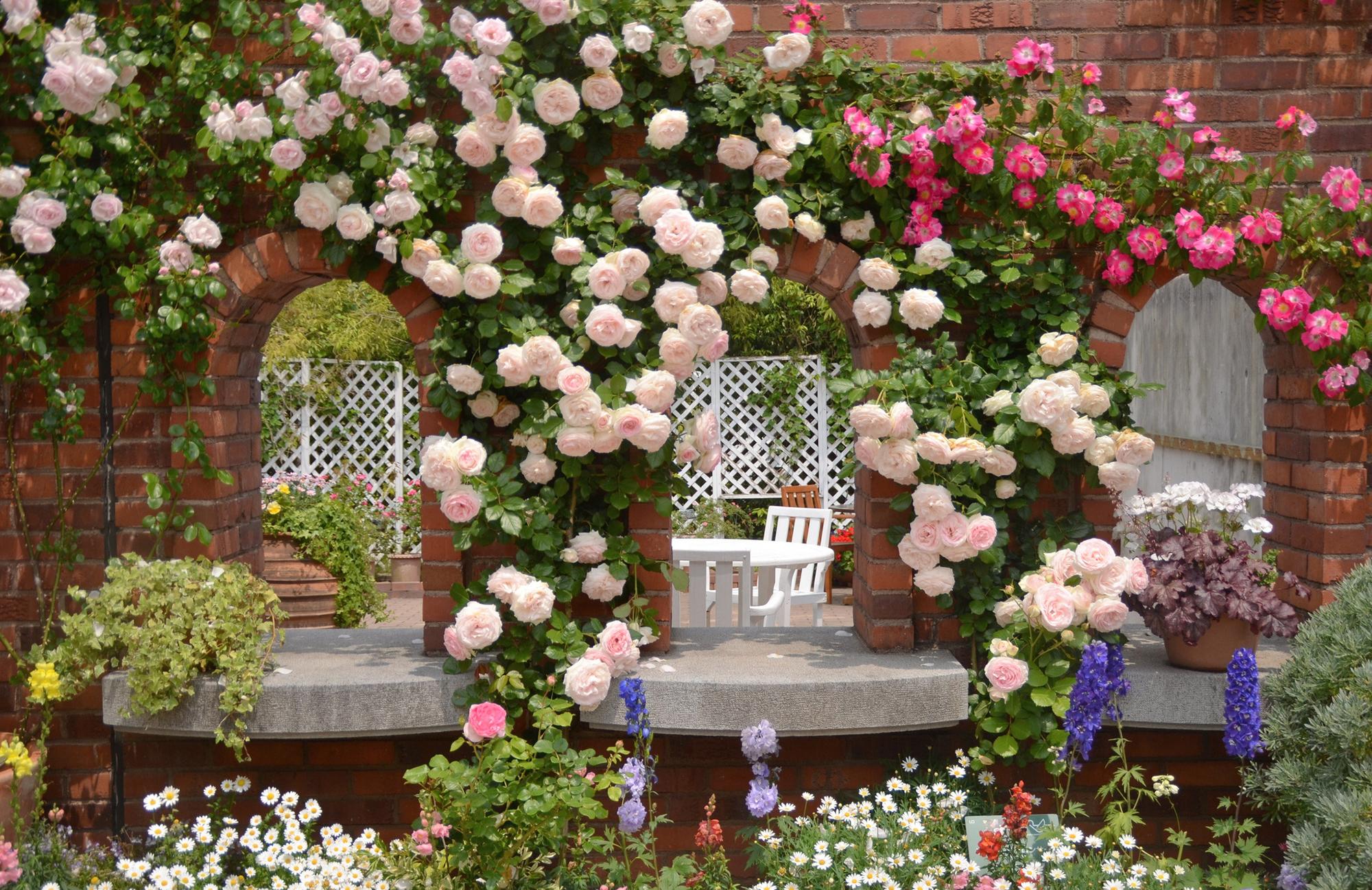 Стена с розами в ландшафтном дизайне участка