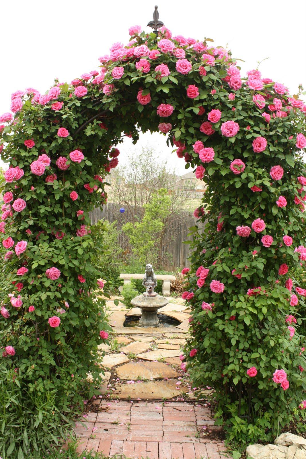 Арка с розами в дизайне участка