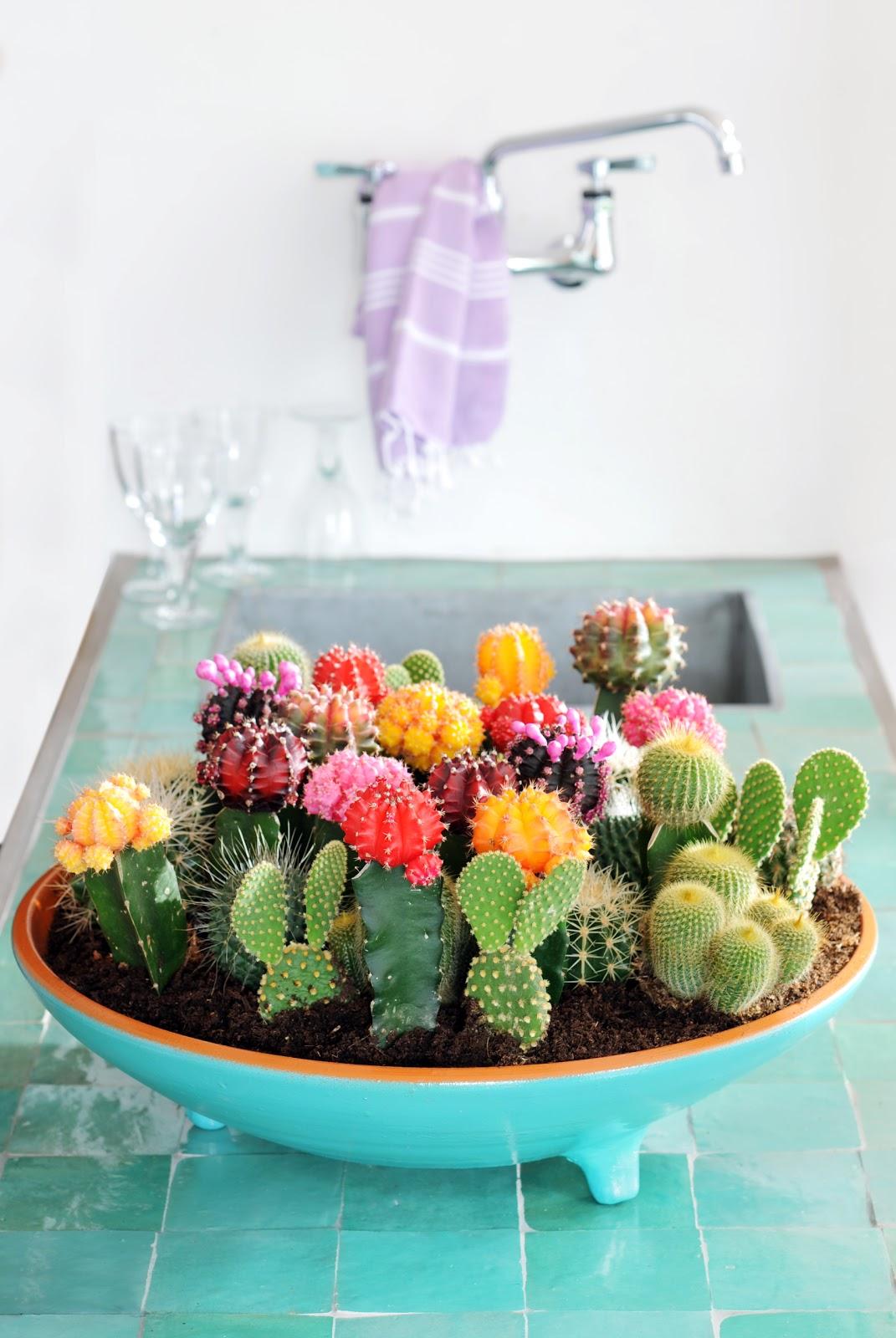 Плоский горшок с разными кактусами