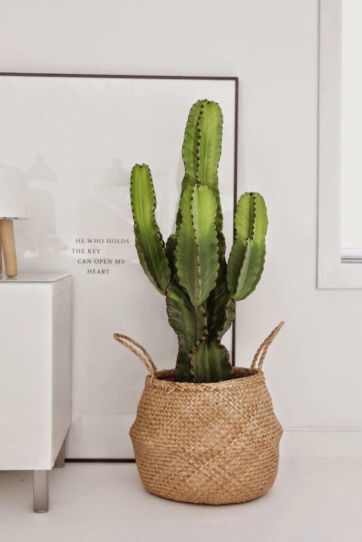 Большой кактус в напольном горшке в светлом интерьере