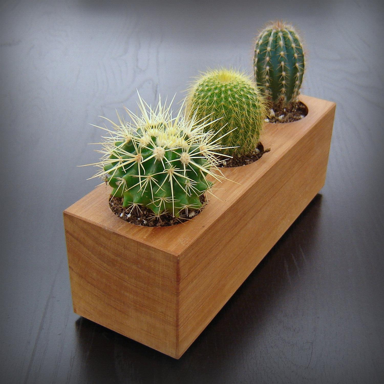 Необычный горшок для нескольких кактусов