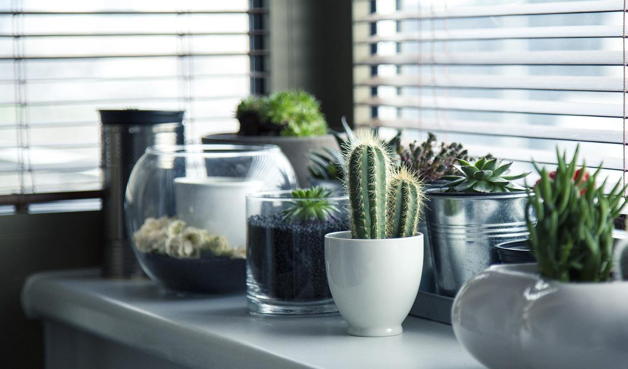 Кактус и другие растения на подоконнике