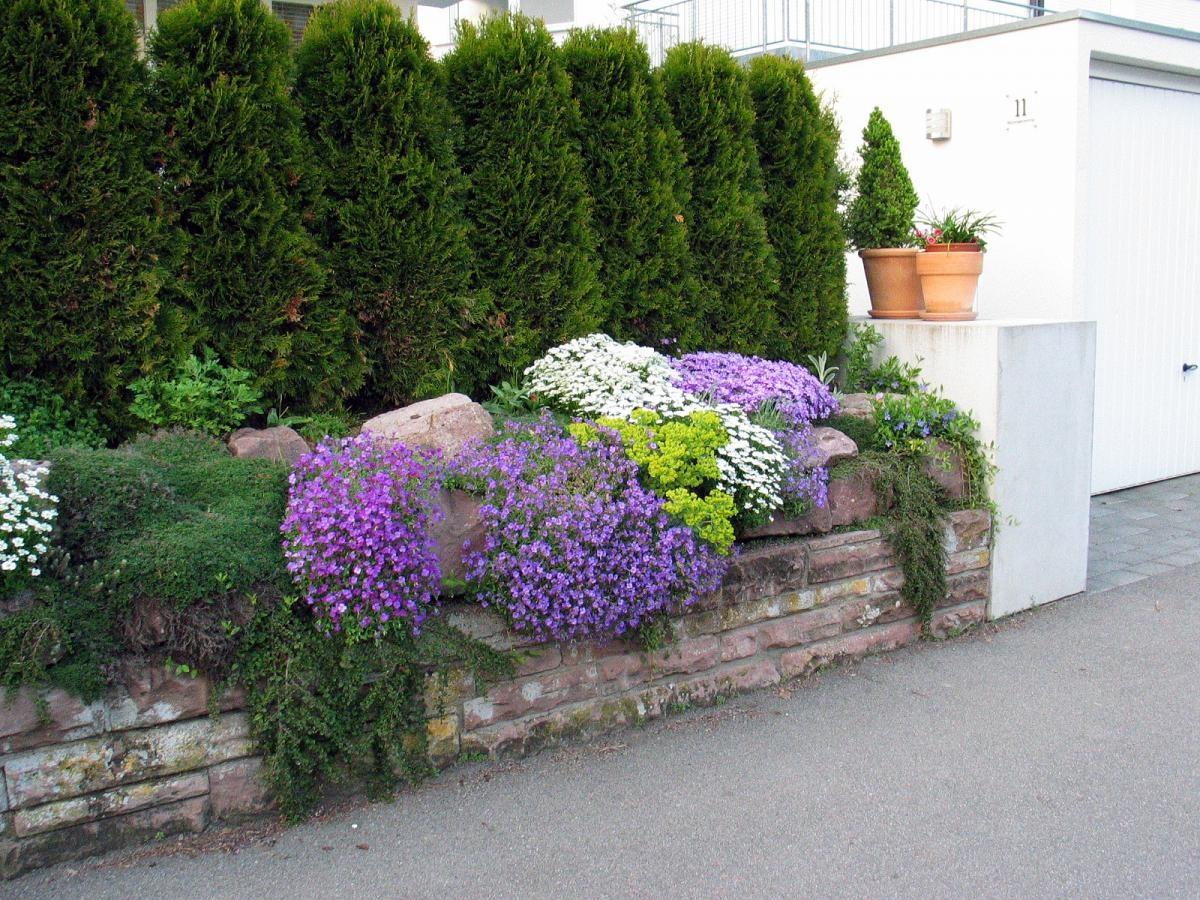 Красивые цветы для украшения участка