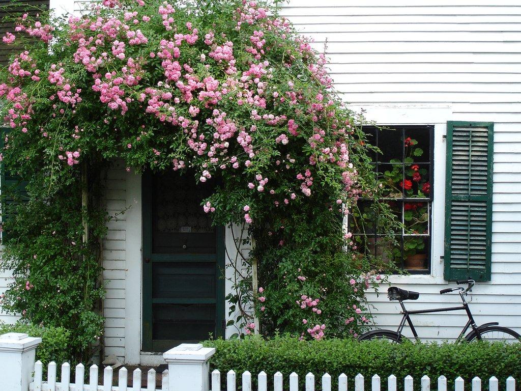 Красивые вьющиеся цветы в украшении дома
