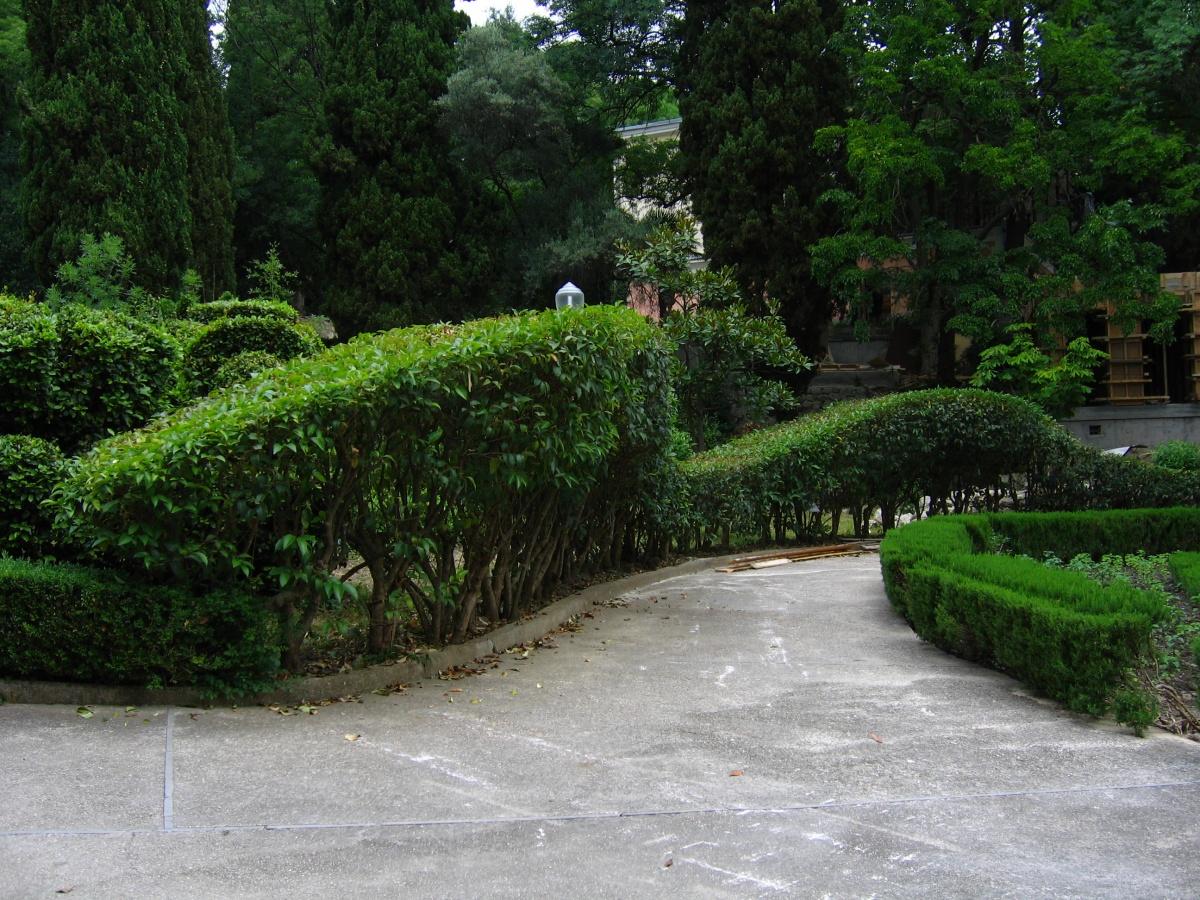 Формованная живая асимметричная изгородь