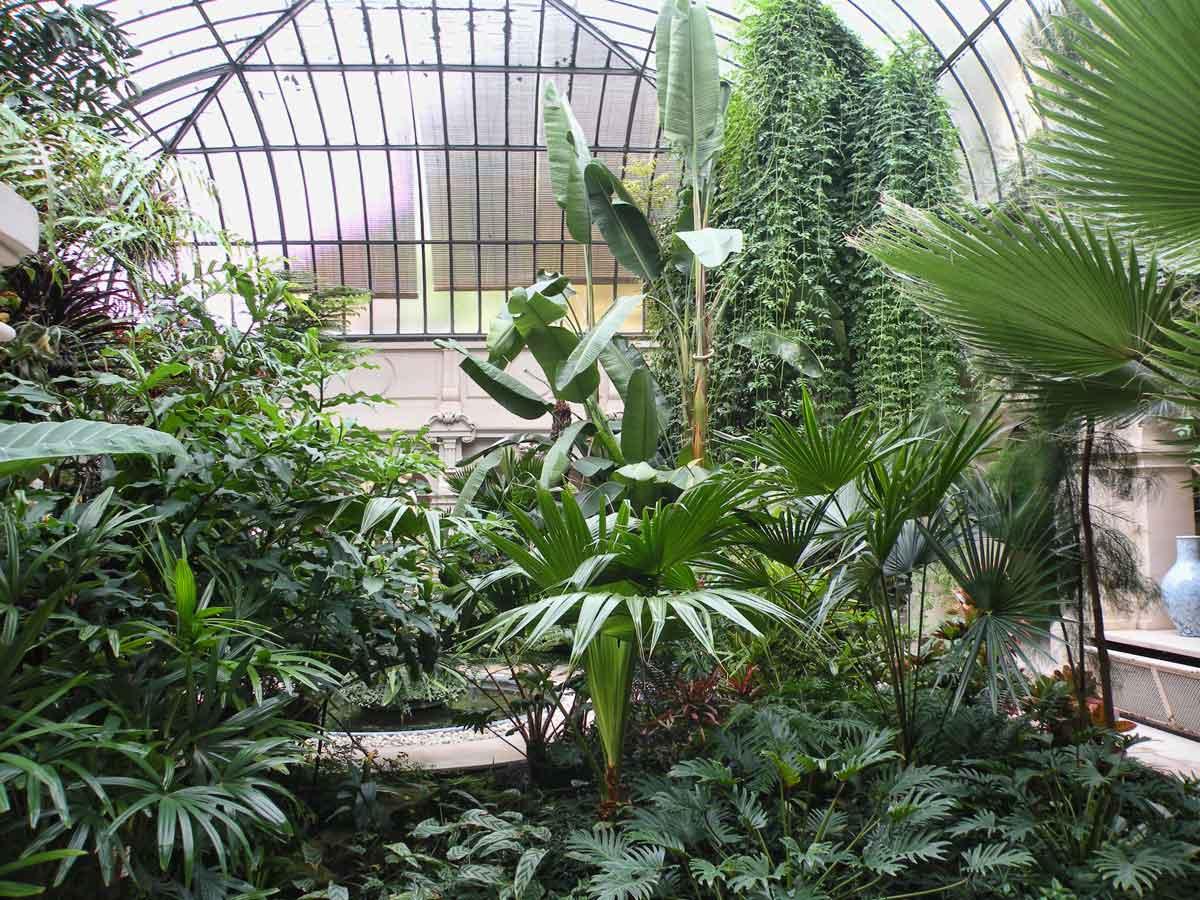 Большая оранжерея с растениями