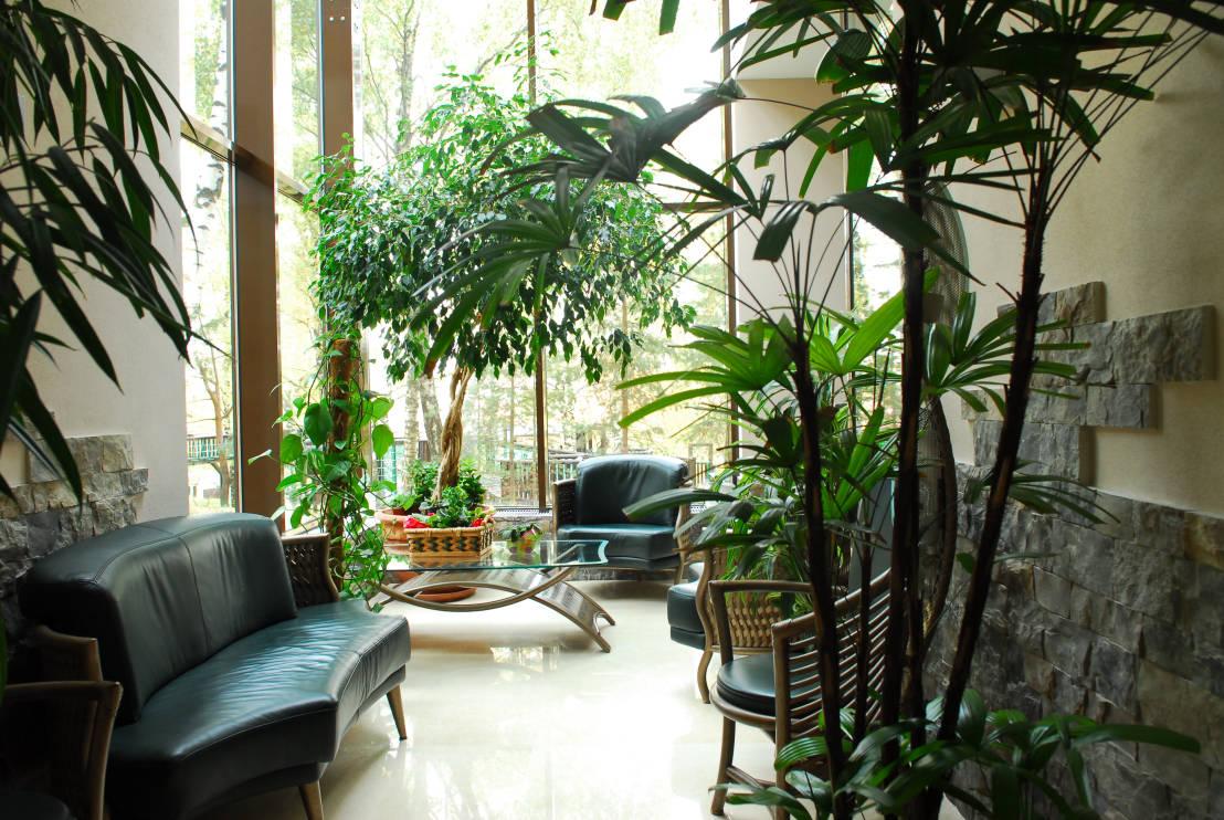 Зона зимнего сада в интерьере дома
