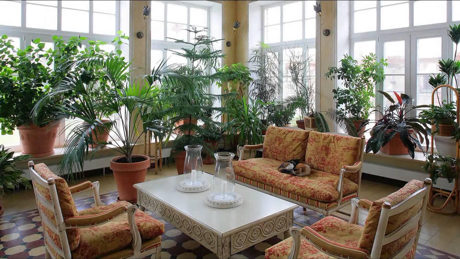Красивый зимний сад в доме