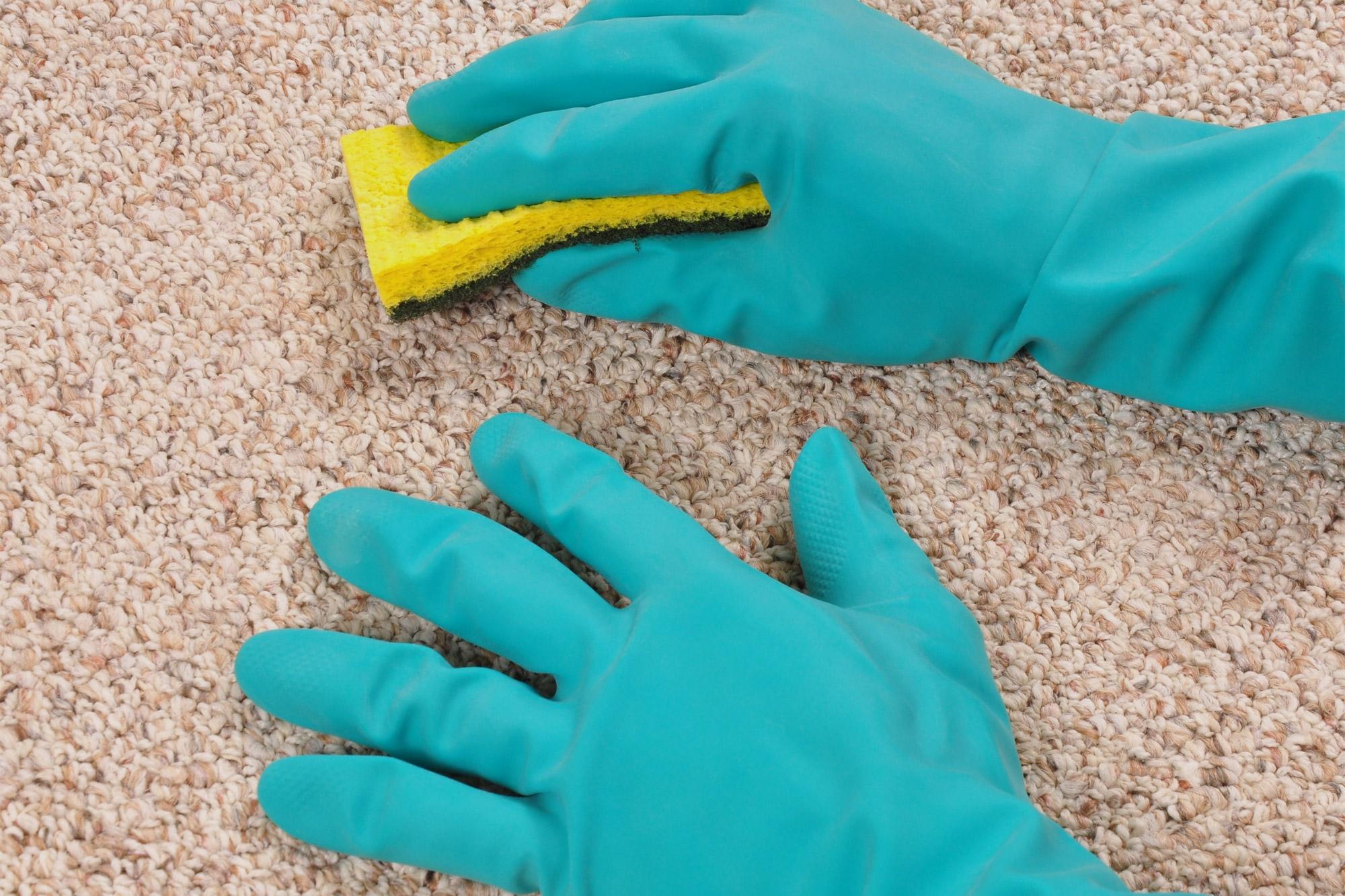 Процесс чистки ковра губкой и Ванишем