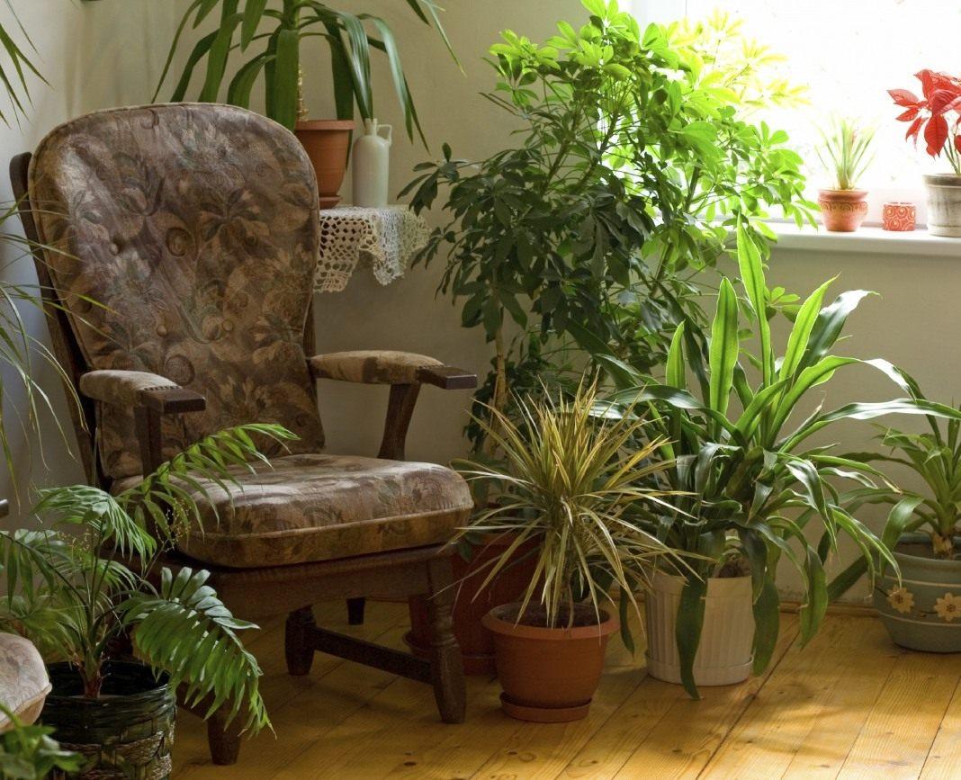Хлорофитум Комнатный, Уход, Выращивание и Пересадка в Домашних Условиях, Виды и Сорта Растения, Полезные Свойства и Вред