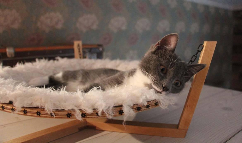 Гамак для кошки деревянный