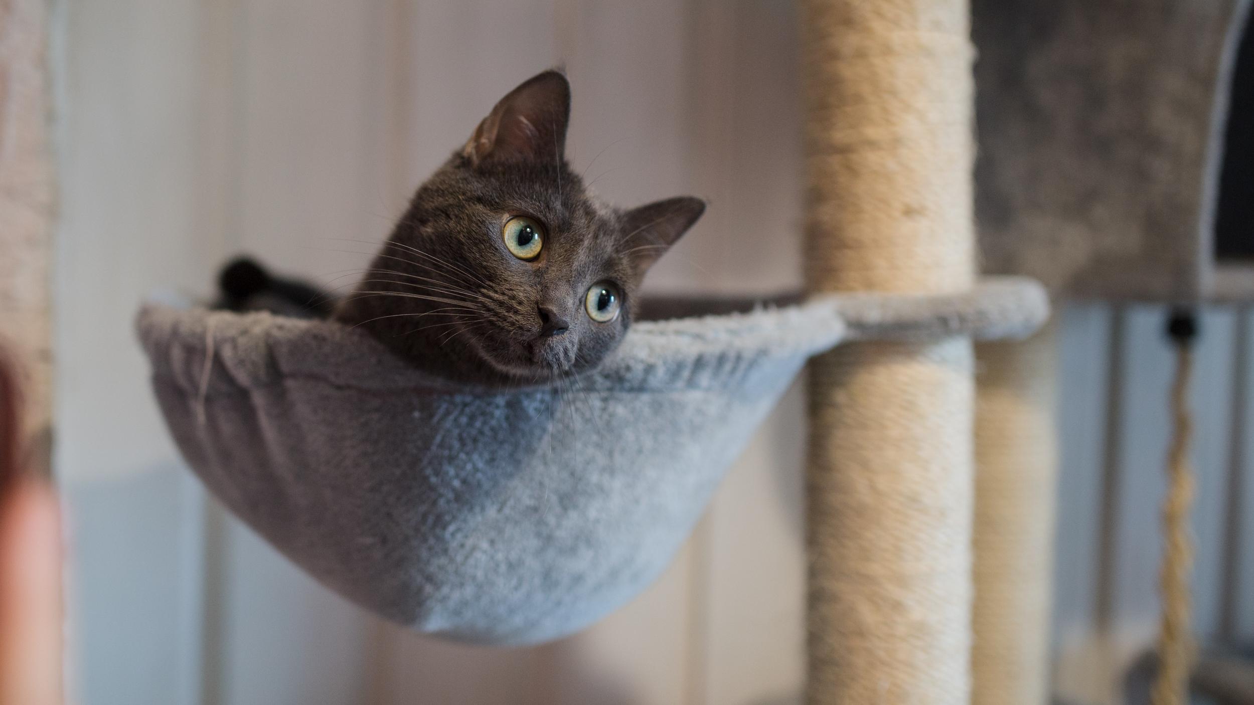 Гамак для кошки из флиса