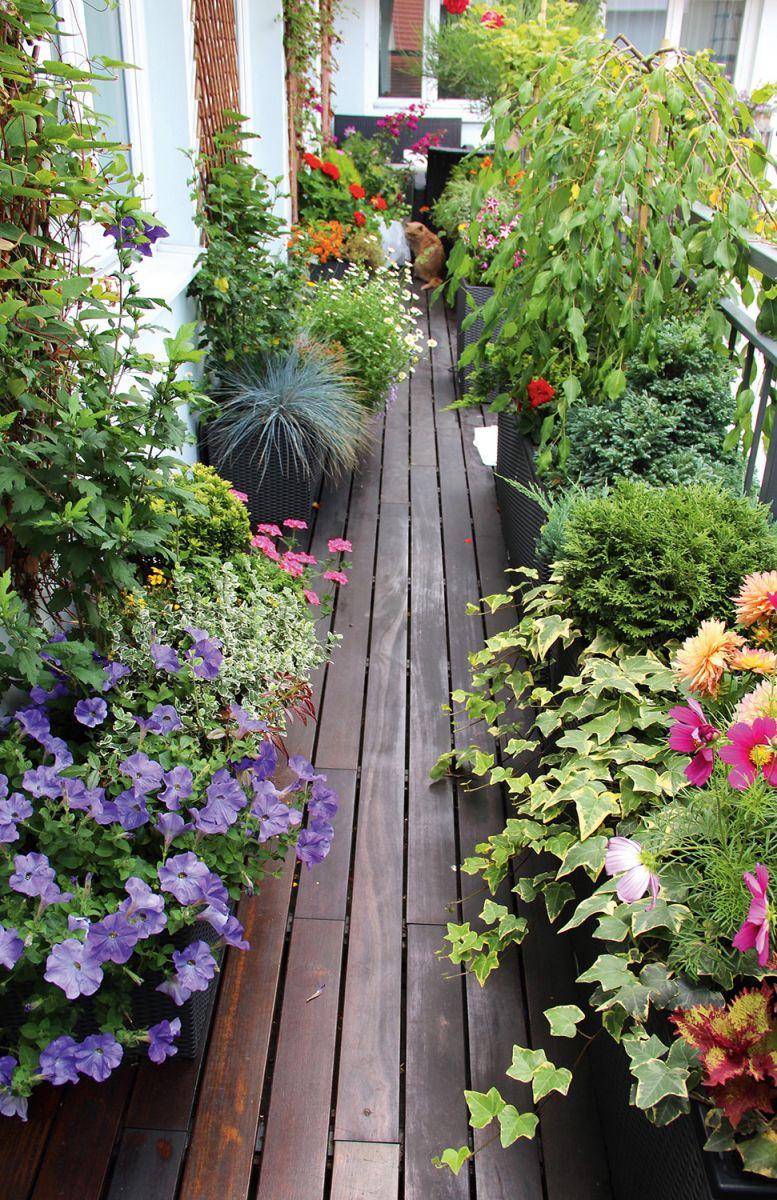 Цветочный сад в лоджии