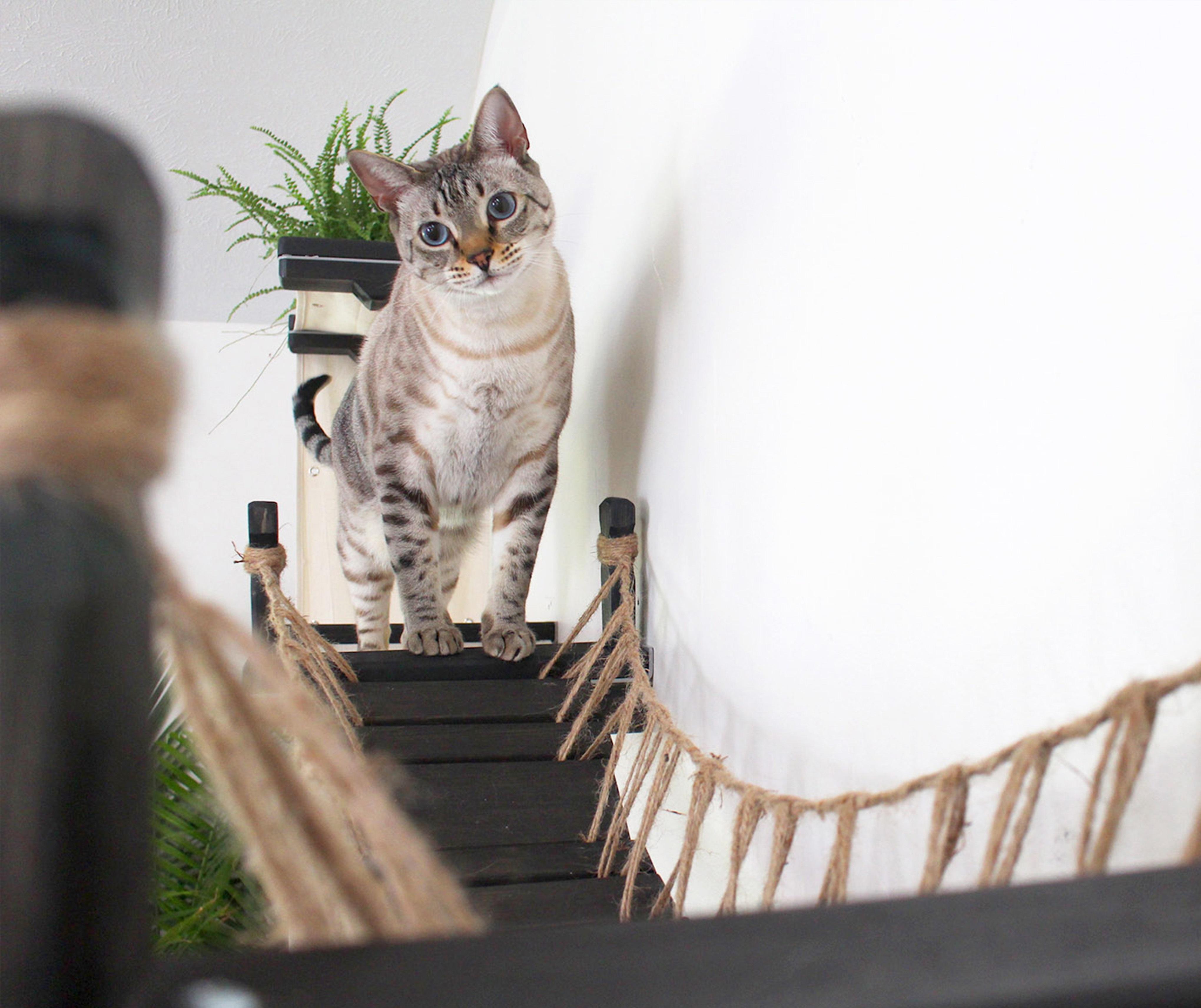 Гамак мостик для кошки