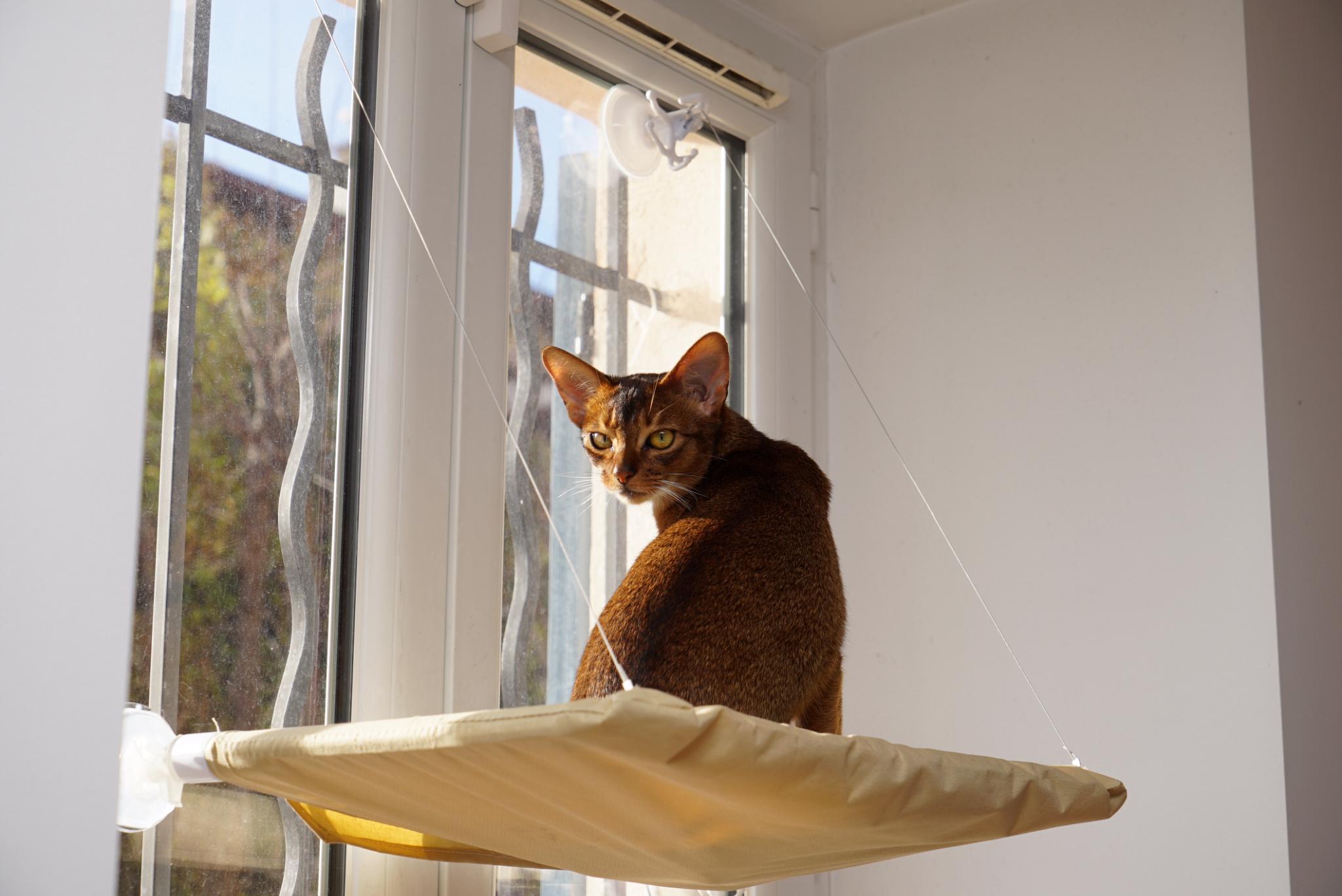 Гамак для кошки на окно