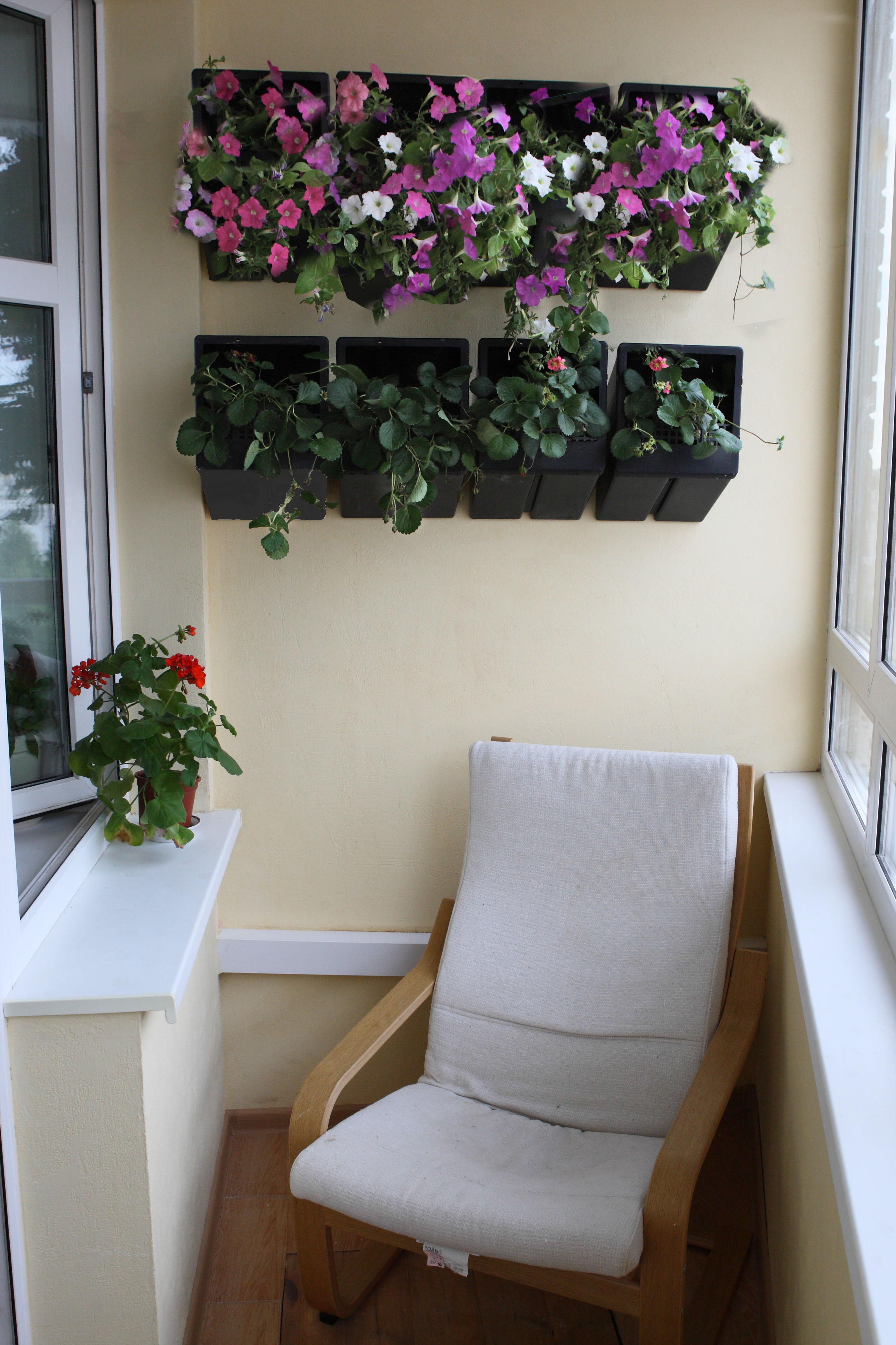 Цветы на стене в лоджии