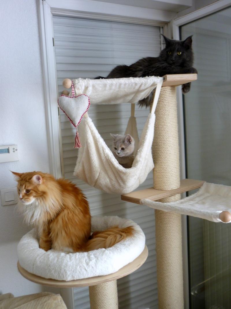 Гамак для кошки на стойке