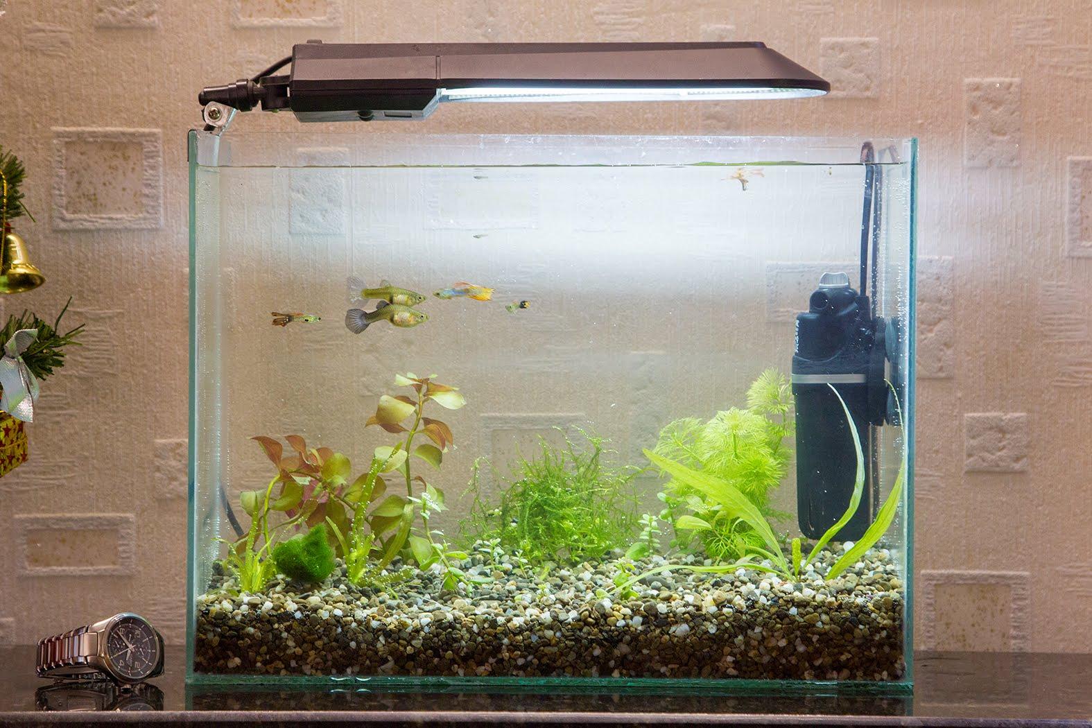Декор для аквариума 20 литров