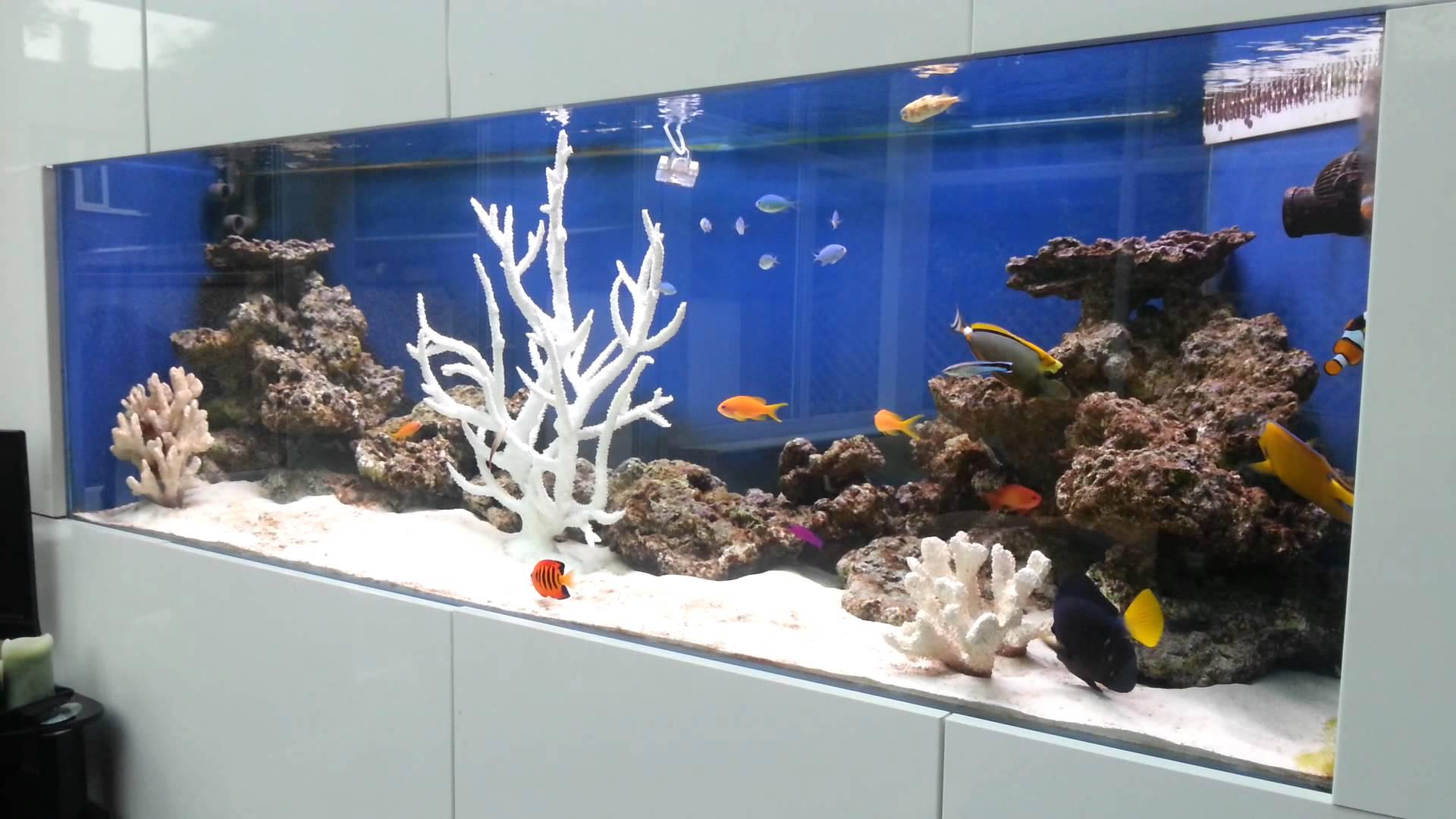 Декор для аквариума белый