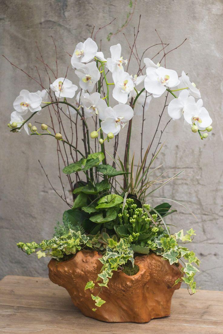 Орхидея Ванда в бонсае