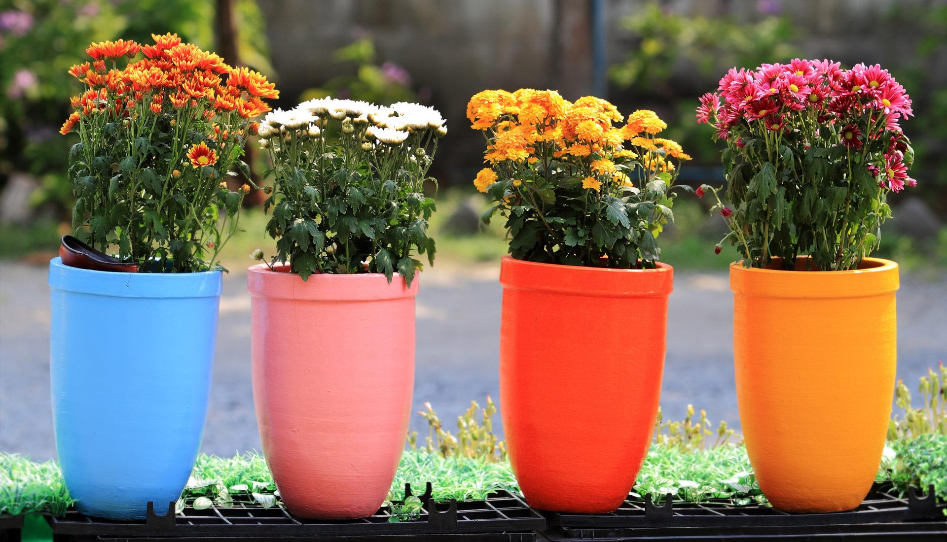 Цветные вазоны для цветов