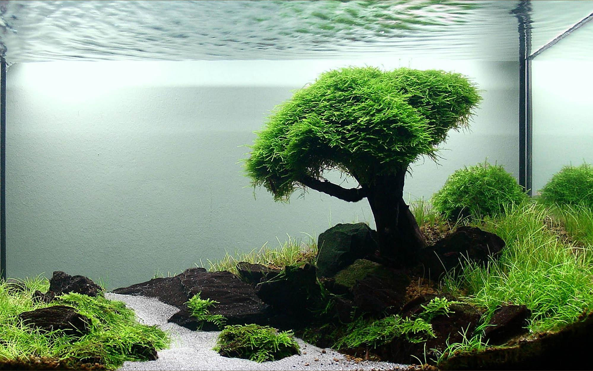 Декоративное дерево для аквариума
