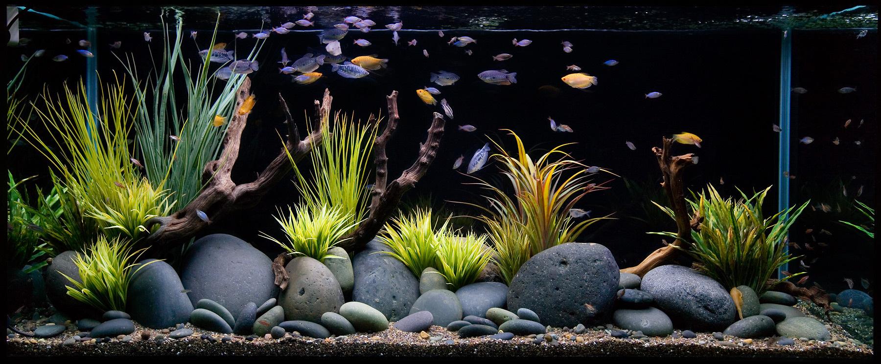 Декор для аквариума с галькой