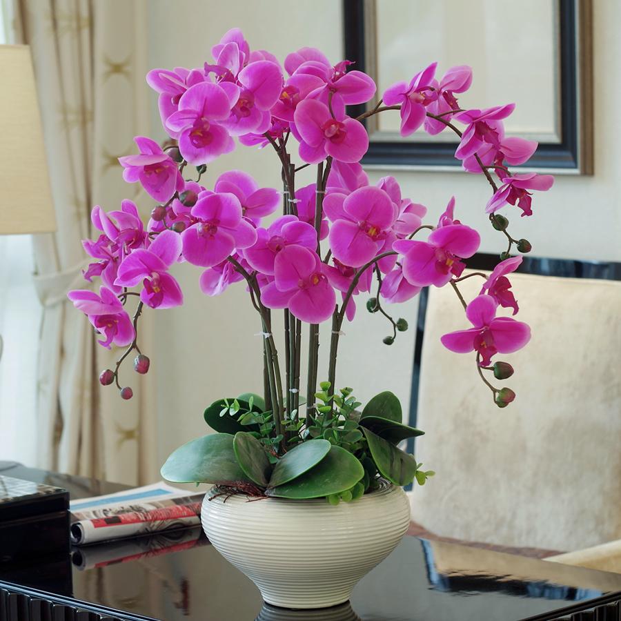 Фаленопсис домашний в интерьере гостиной