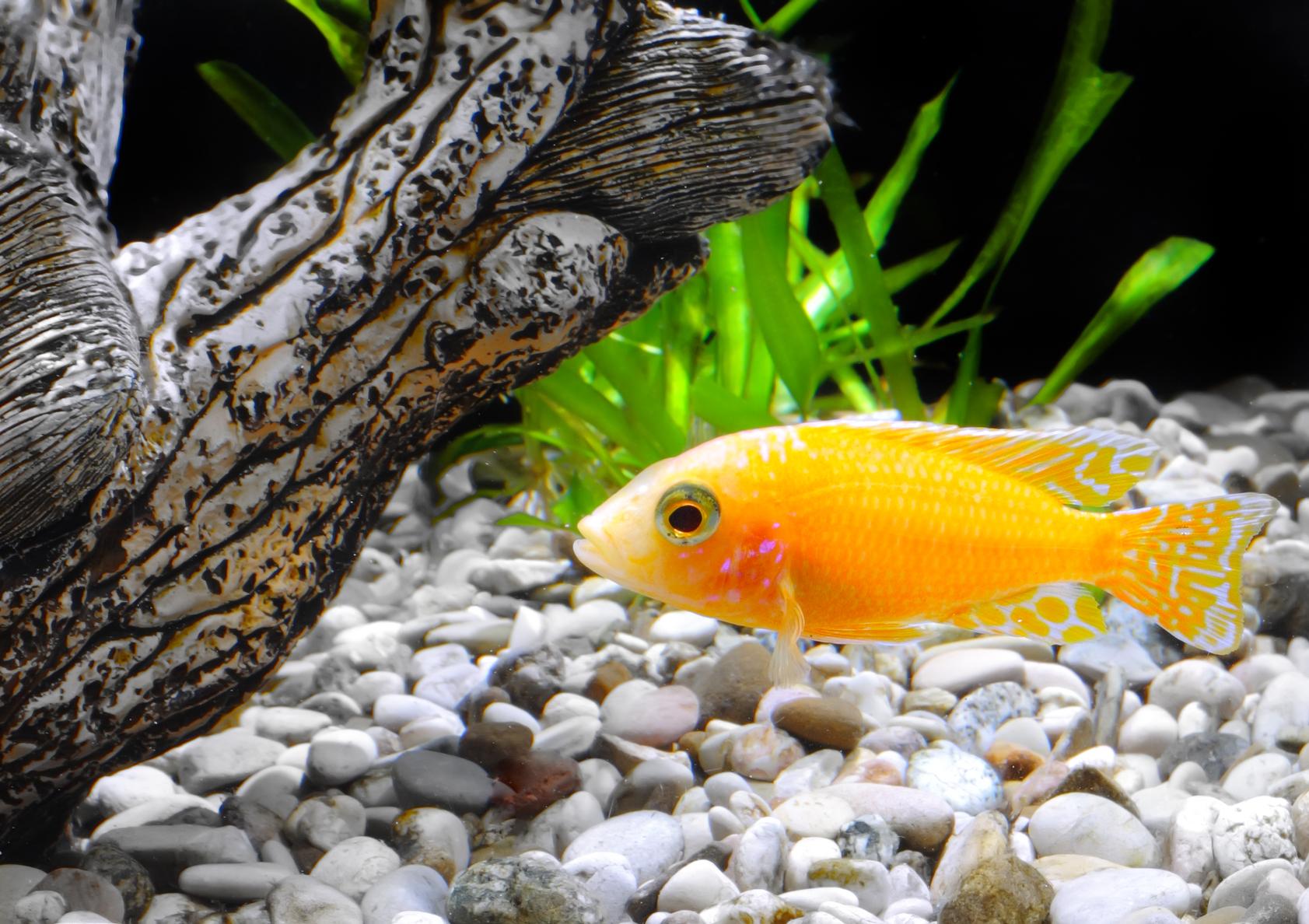Декор аквариума: новый водный мир (89 фото)