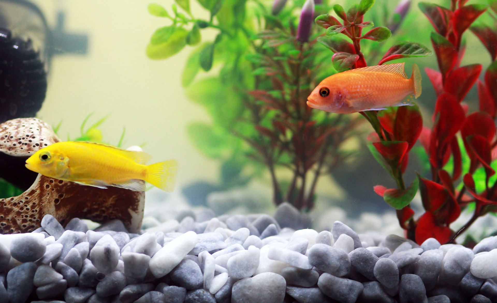 Декор для аквариума с камешками